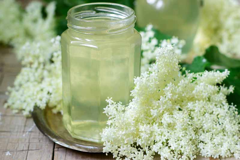 Homemade tincture of elderberry flowers in a glass jar.
