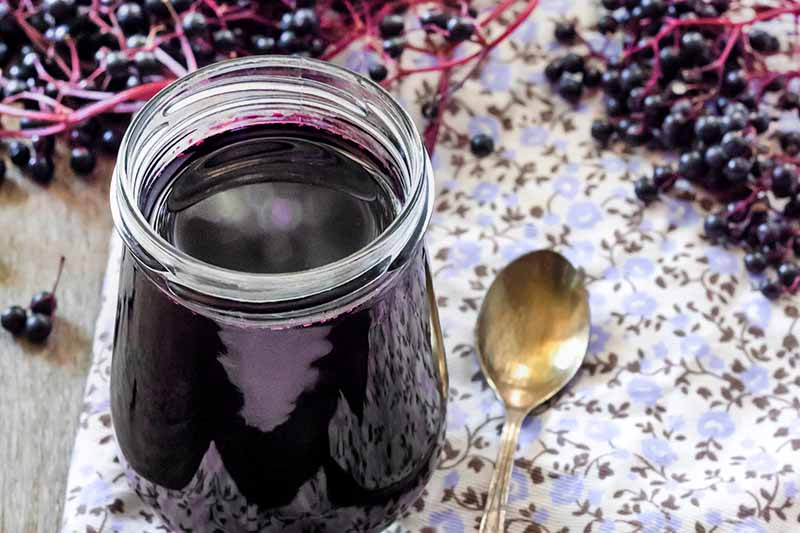 Close up of a jar of elderberry syrup, with a spoon beside, on a floral fabric. To the left, the wooden counter top is visible, and soft focus ripe elderberries in the background.