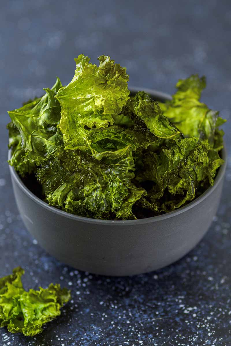 A close up of a gray ceramic bowl containing kale chips, on a dark gray background.