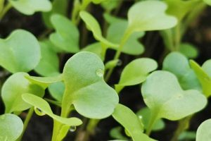 What Month Should You Sow Kale?