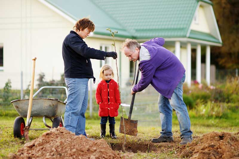 A little girl and her grandparents plant a tree in a suburban backyard in the autumn. All are wearing light jackets.