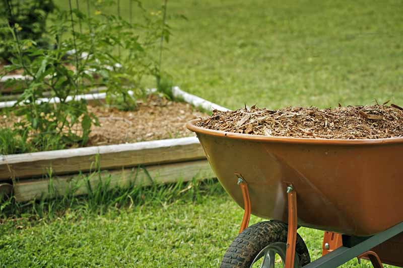 A close up of a brown metal wheelbarrow, with bark mulch. The background is lawn and a raised garden bed, with a wooden surround.