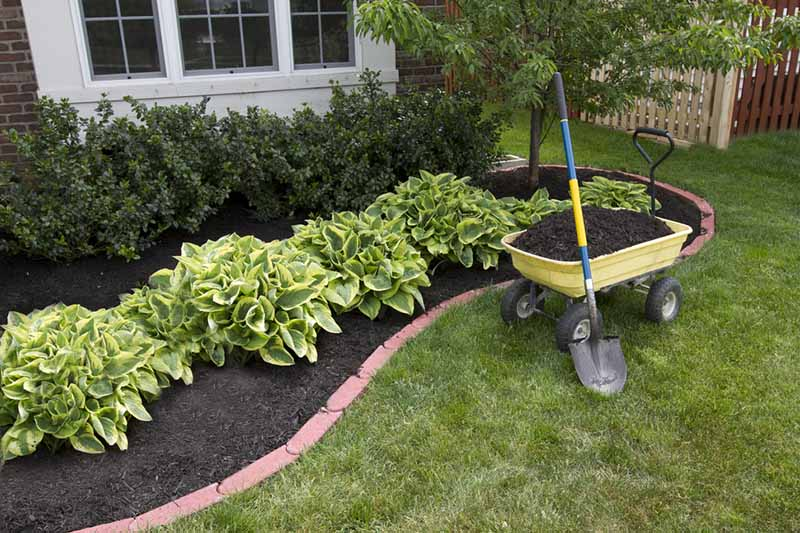 Outside a white framed window is a neat planting bed, with green bushes, surrounded by dark compost, with a brick boundary, lawn to the front and right of the image and a yellow wheelbarrow full of compost, and a spade propped up against it.