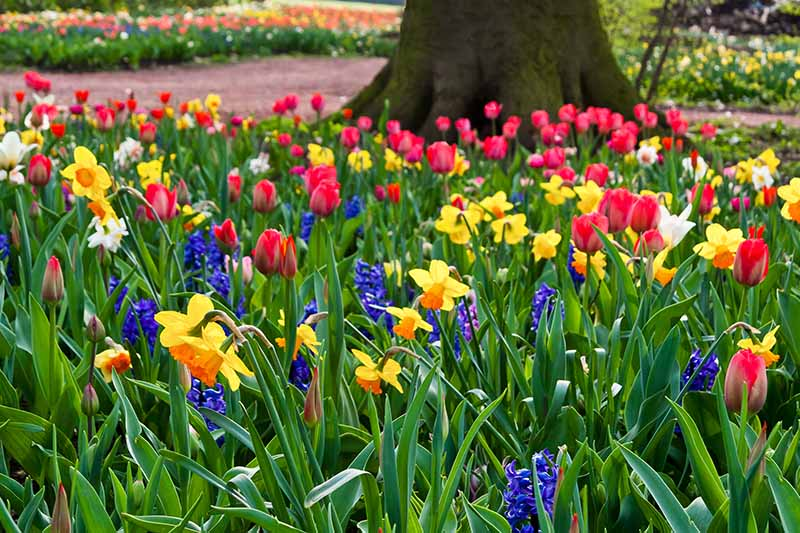 Various spring flowers, red, yellow, and purple, amongst bright green foliage, in the background is part of a tree trunk, a pathway and more flowers in soft focus.