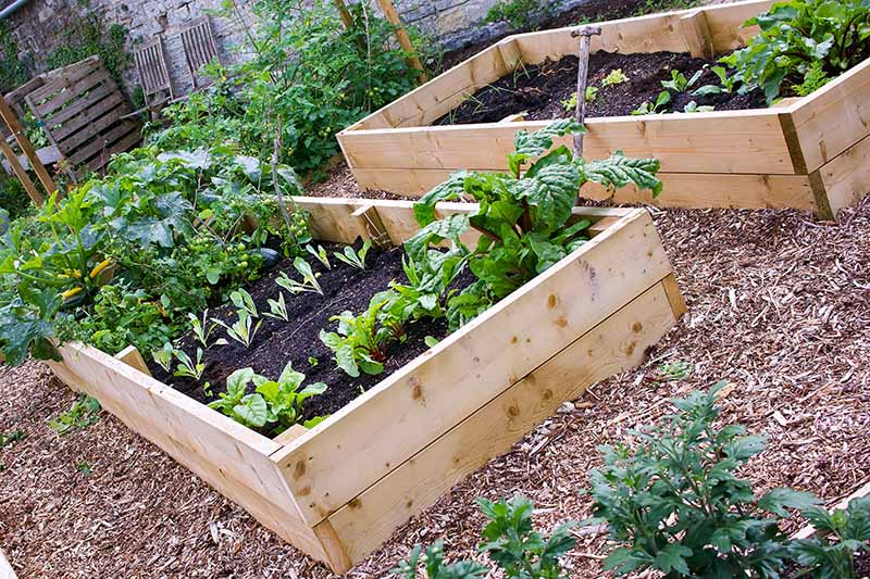 Two raised garden beds, made of timber, a mixture of seedlings and mature vegetables planted in the dark soil. Wood chips surround both garden beds. In the background is a stone wall with two chairs and a wooden pallet compost pile.
