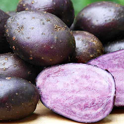 Close up of 'Purple Majesty' potatoes, showing deep purple colored skin, on a wood surface. In the foreground is one cut in half showing the light purple flesh.