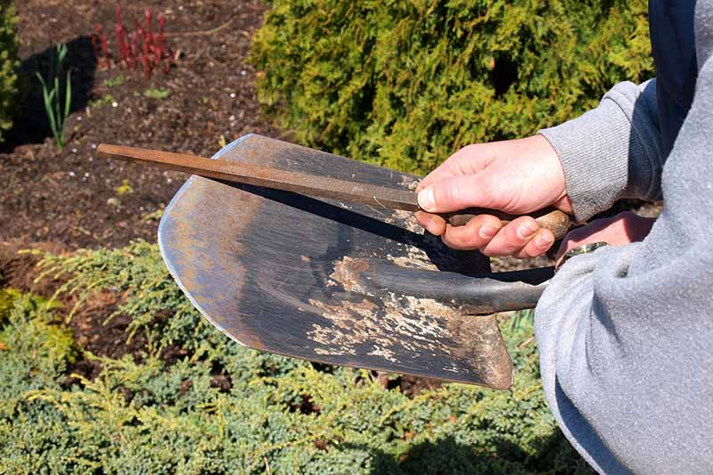A man's hand and arm on the right of the frame, holding a sharpening tool, and using it to sharpen the end of a metal shovel. The background is soil and bushes, in bright sunshine.