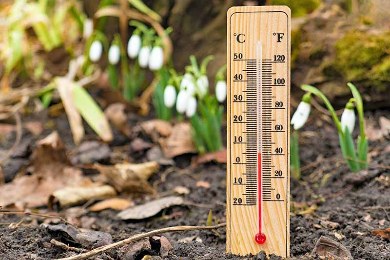 A wooden soil thermometer, in the ground, showing a temperature of 40°F. Soil and seedlings in a soft focus background.
