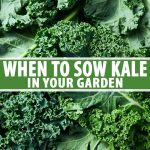 A close up of freshly harvested curly kale leaves, their dark green color contrasting with the lighter veins. In the center and at the bottom of the frame is green and white text across the image.