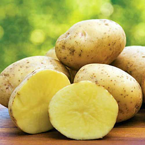 Whole 'Yukon Gold' potatoes, with one cut in half, showing pale yellow flesh and light brown skins. On a wooden surface with a soft focus green background.
