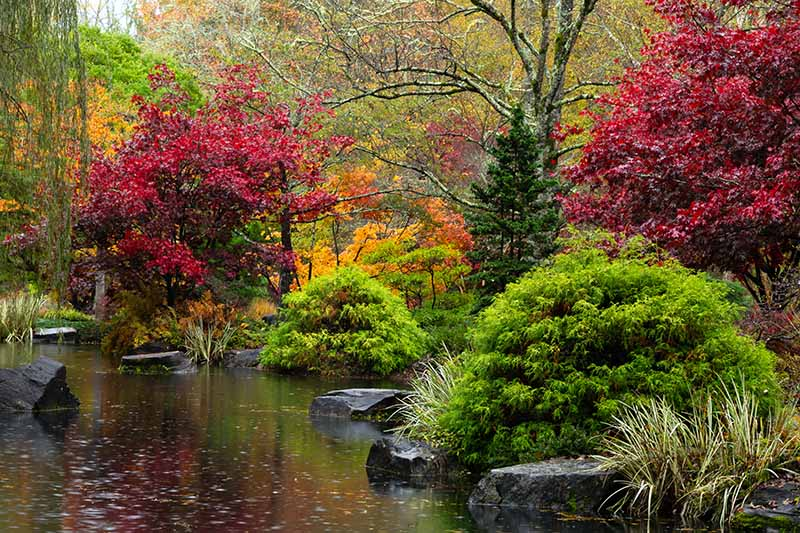 A small lake surrounded by bushes and trees with their autumn colors. Deep red leaves contrast with greens, ornamental grasses growing near orange leaves. In the lake are large black rocks and a weeping willow to the left of the frame. The background is forest in soft focus.