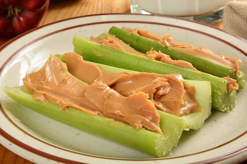 A close up of four celery stalks, leaves trimmed off, cut into lengths with peanut butter inside them. The background is a ceramic white plate with a red detail around the edge, on a wooden surface.