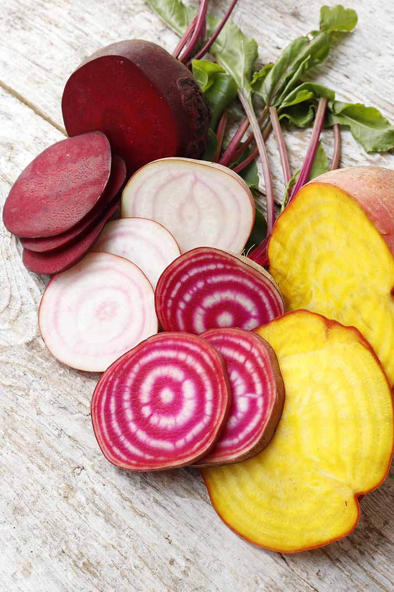 A vertical image of three different varieties of beetroot, sliced to show the color of the inner flesh. To the left of the frame is a deep red one, next to it a white one with light purple circles, a dark pink color with white circles and to the right is a golden color with a reddish skin. The background is a wooden table with some green leaves.
