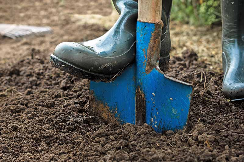 A close up of a boot pushing a blue spade into soil.