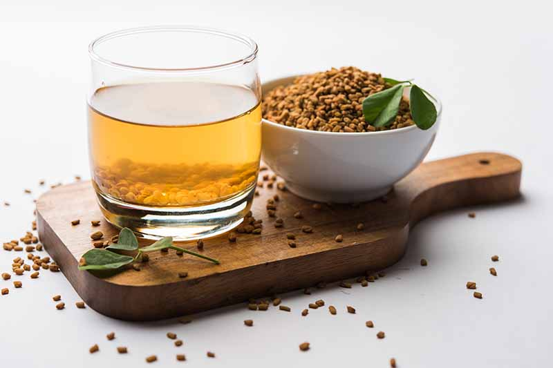A wooden chopping board with a glass containing liquid and fenugreek seeds. To the right is a white bowl filled with the seeds, and a couple of green methi leaves. On a white background.