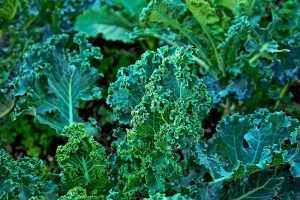 Can You Eat Kale That Has Turned Yellow?