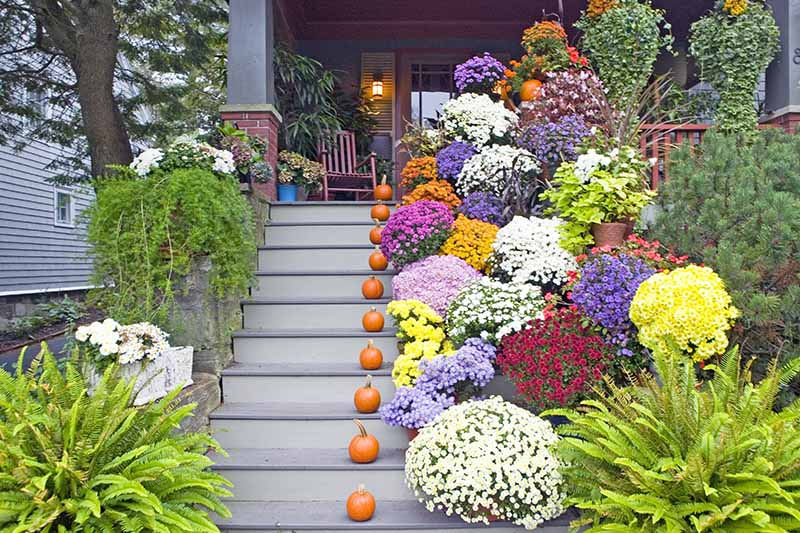 Wooden steps leading up to the front porch of a house, with pumpkins on each step. To the left of the frame the neighboring house can be glimpsed and there is green foliage by the side of the steps. To the right are a large collection of round shrubs all with different colored flowers, ferns and vegetation.