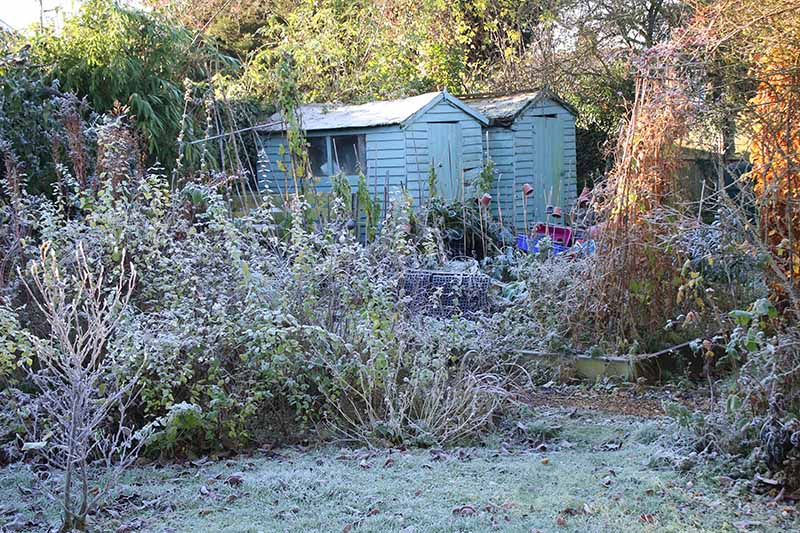 A garden in fall sunshine with a light frost on the ground. In the background are two pale green wooden sheds, surrounded by vegetation. In the foreground is a lawn with fallen leaves.