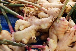 Ginger Houseplant Care Tips: How to Grow Ginger Indoors