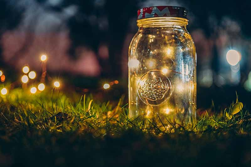 A close up of a mason jar containing string lights, on a lawn at night with soft focus dark background, with small bursts of light.