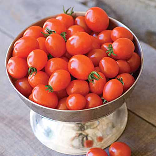 A close up of a metal bowl on a wooden surface filled with small red 'Napa Grape' tomatoes, some with the stems attached.