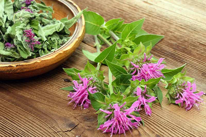A close up of a few stems of light purple monarda flowers on a wooden surface with a bowl of dried flowers and leaves behind it.