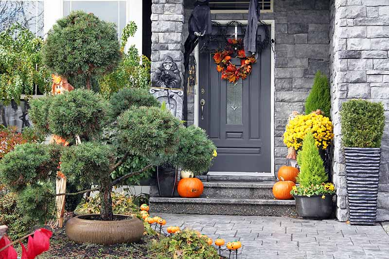 A dark gray front door with a bright red and orange wreath, and black drapes. Surrounding it is a light gray stone wall, with pumpkins and plants on the step, bright yellow flowers and to the right of the frame pots with evergreen shrubs. To the left of the frame is an ornamental evergreen in a brown pot.
