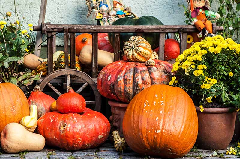 A display of pumpkins and gourds, a large orange one in the foreground and to the left large and small red ones. In the background is an antique wooden wagon, full of winter squash, with a fabric doll. To the right of the frame is a terra cotta pot with a plant with yellow flowers, the background is a stone wall.