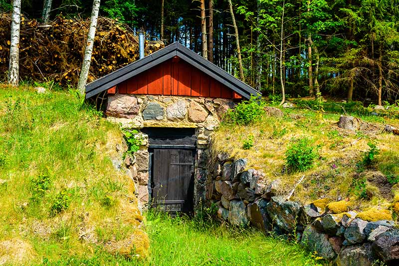 A small stone building with a wooden roof set into the ground, with stone retaining walls on either side leading to the entrance door. This root cellar has a dark wood door, surrounded by grass and vegetation in bright sunshine. The background is a pine forest.