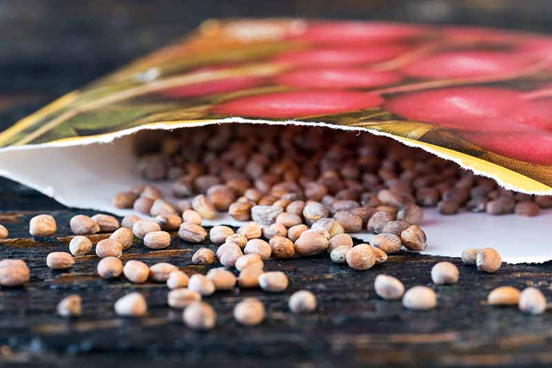 A close up of an open packet of seeds, with seeds spilling out on to a wooden surface.