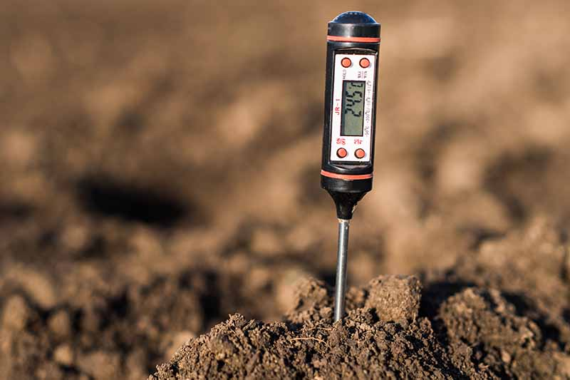 A close up of a soil thermometer, the metal rod at the bottom is in a pile of soil, the top is a black handle with a digital display and red buttons. The background is dark soil in soft focus.