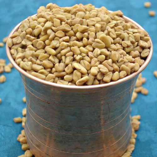 A close up of a small metal pot full to the brim and overflowing with fenugreek seeds, on a blue background.
