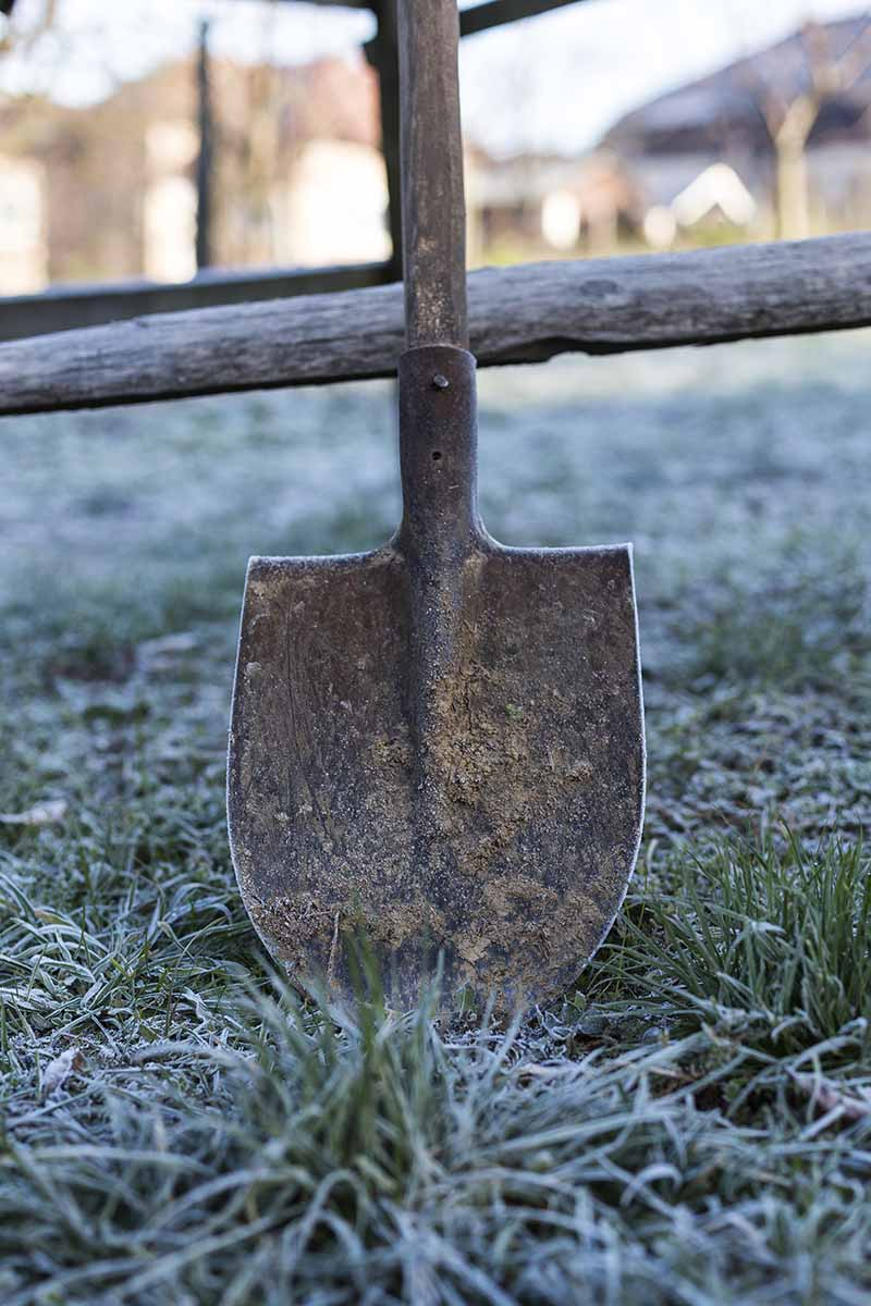 A vertical image of a garden spade resting against a wooden post and rail fence, on frosty grass in light winter sunshine.