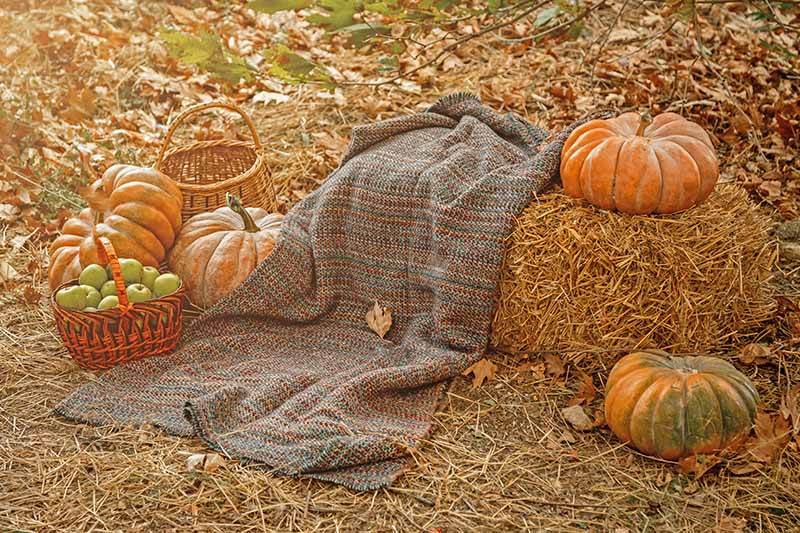 A straw bale, draped with a knitted rug on the background of fallen leaves with large pumpkins on both sides of the frame. To the left of the frame is a basket with green apples and a decorative empty basket.