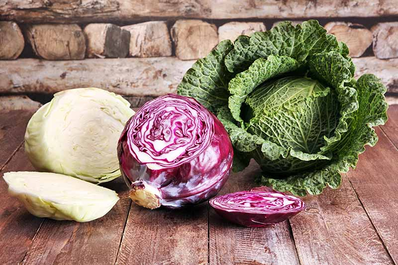 A wooden surface with three different Brassica oleracea vegetables on it. From the left, a white one, chopped in half, in the center a red variety with a slice out of it, and to the right a savoy cabbage, whole. The background is wood.