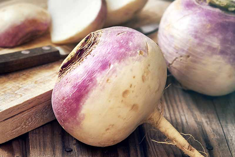 A close up of clean turnip roots, on a wooden surface, with some sliced in the background. A knife is visible to the left of the frame and the root itself is a light white with a purple top.