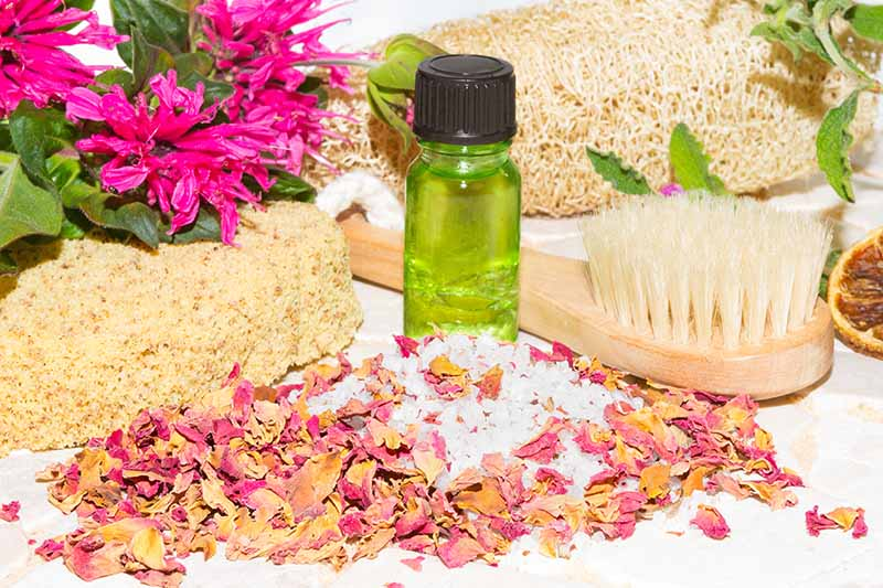 On the left of the frame is a bunch of bright green bee balm flowers with foliage attached, with a loofah, a body brush and a natural sponge. In front is a small green bottle and dried flower petals.