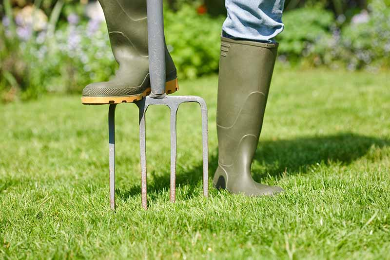 A close up of the legs of a person wearing green boots with one foot on a garden fork pushing it into a lush green lawn, in bright sunshine. In the background is vegetation in soft focus.