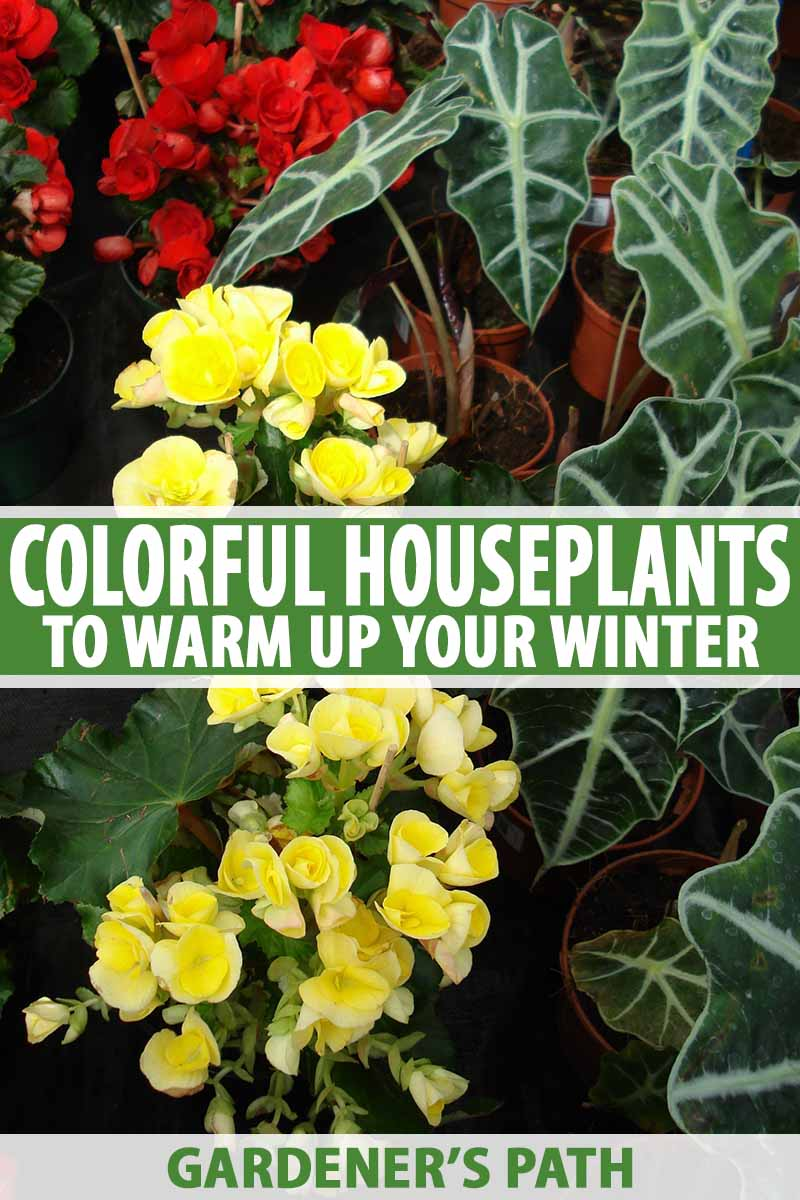 Image of: 23 Colorful Houseplants To Warm Up Your Winter Gardener S Path