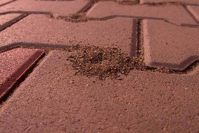A close up of a brick pathway with a small pile of soil created by pavement ants who have made their home in the cracks between the paving stones.