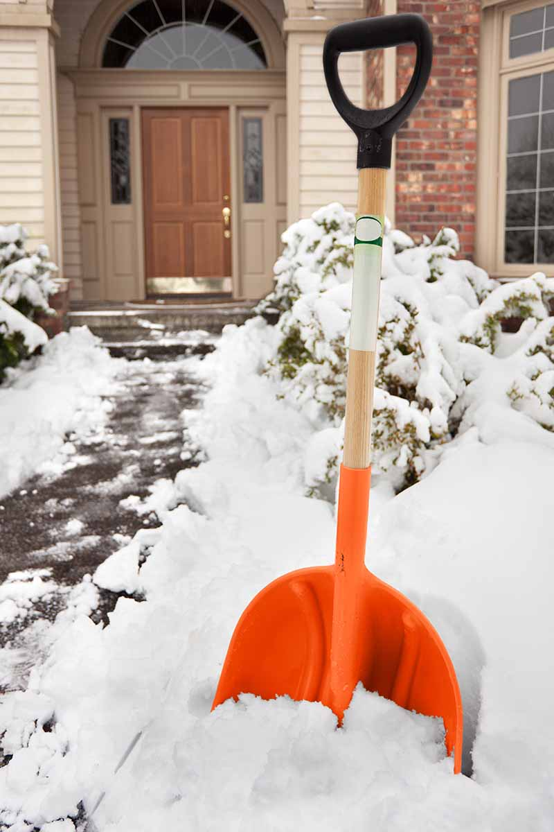 A winter scene with an orange shovel in snow, with a porch and front door of a house in the background. Snow covered bushes and a partially cleared pathway to the left of the frame.