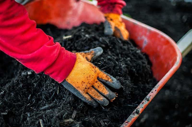 A close up of two hands from the left of the frame scooping out dark, rich soil from a red wheelbarrow, the background fading to soft focus.
