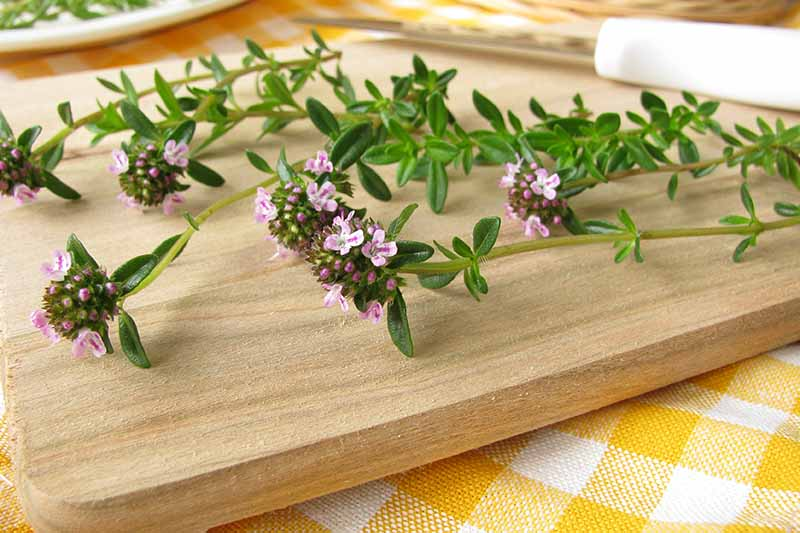 A close up of a wooden chopping board on a yellow and white checked tablecloth with freshly harvested sprigs of winter savory. Pink and white delicate flowers contrast with the bright green leaves. In the background is a knife in soft focus.