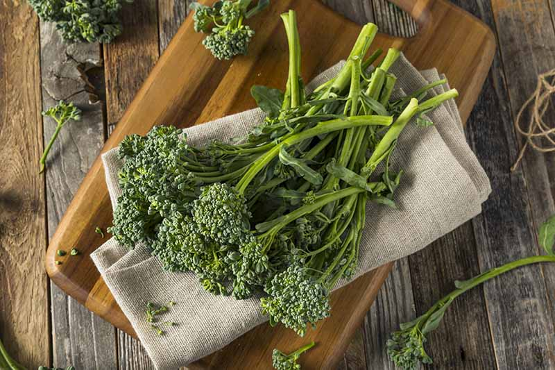 A close up of a wooden chopping board with a bunch of fresh broccolini on a light brown fabric set on a rustic wooden surface.