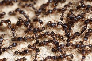 How to Control Ants in and Around Your Home