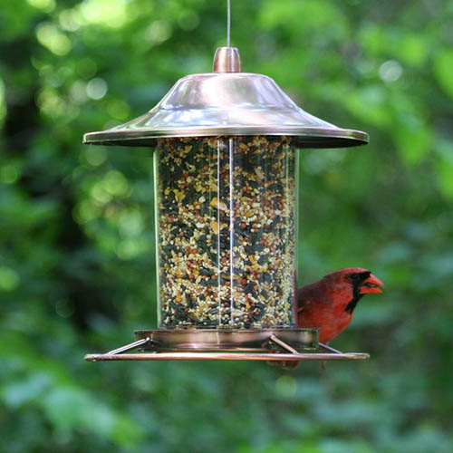 "A close up of a red cardinal eating at a copper panorama bird feeder. The unit has a clear tube with a copper ""hat"" at the top and a perch ring at the bottom. The background is green in soft focus."