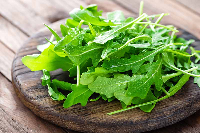 A close up of fresh arugula leaves, with water droplets on them, set on a wooden chopping board on a wooden surface.