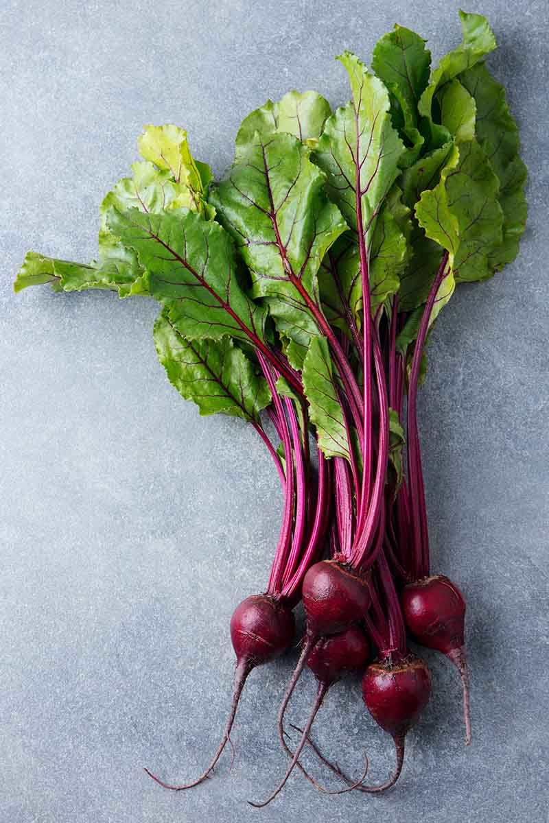 A vertical picture of beets with their greens still attached, the roots are a deep purple and the foliage bright green with purple stems, set on a gray background.