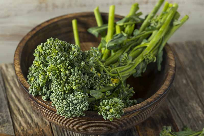 A close up of a wooden bowl containing freshly harvested broccolini set on a wooden surface fading to a soft focus background.
