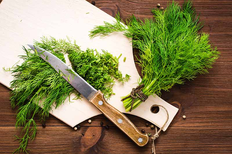 A top down picture of a white chopping board with a kitchen knife and fresh dill herbs, some chopped, some still in bunches, on a wooden surface.